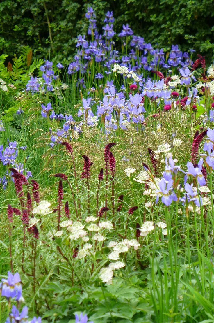 best borders images on pinterest landscaping flowers garden