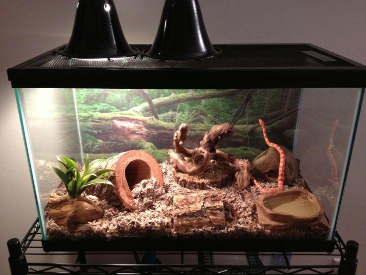 How to set up Corn snake vivarium