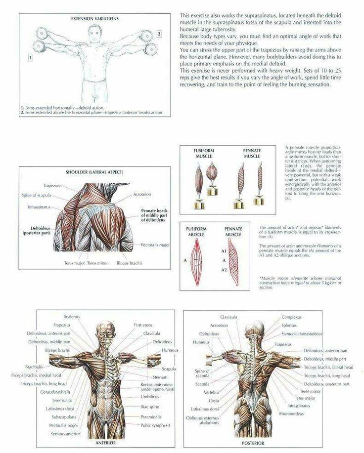 117 besten Shoulder WO Bilder auf Pinterest | Schulter, Sportübungen ...
