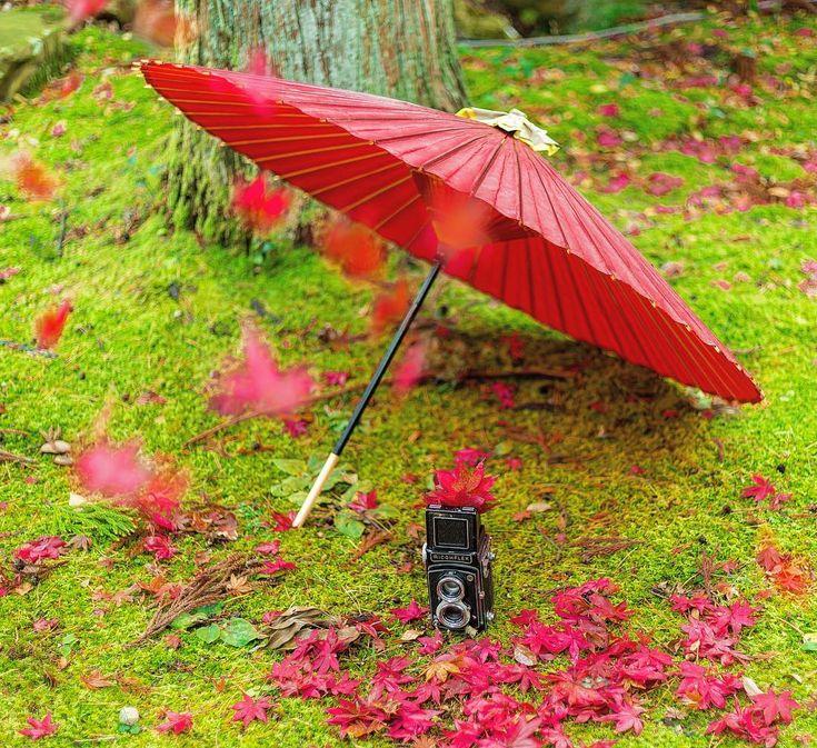 * * * 落ち葉がひらり🍂🍁 * * location: niigata / japan * * おはようございます! 外はアラレが降ってます😭 * 今月中に秋picださないと😵 * * #弥彦 #弥彦公園もみじ谷 #special_spot_member #広がり同盟メンバー #niigatapic_member #flower_special_ #daily_Photo_jpn #art_of_japan_ #lovers_amazing_group #whim_fluffy #japan_daytime_view #inspring_shot #impression_shots #ray_moment #shotz_times #nipponpic #photo_travelers #retrip_nippon#はなまっぷ #wp_flower #wp_紅葉2017 #はなまっぷ紅葉2017 #team_jp_秋色2017 #Lovers_Nippon_2017秋コン #Kani_Filter_2017秋コン #nipponpic_秋たけなわ20...