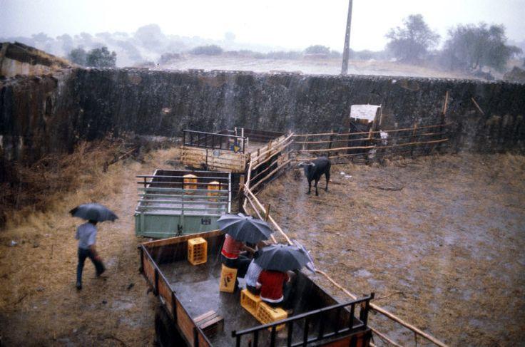 Bruno Barbey - PORTUGAL. Portel village, Alto Alentejo region. A small bullfight. 1979.