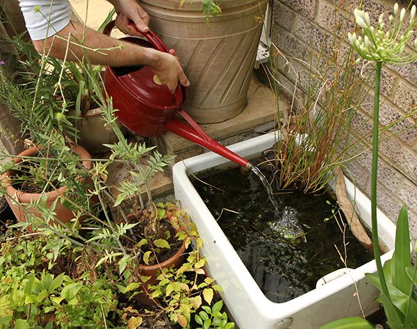 Create a mini pond #homesfornature