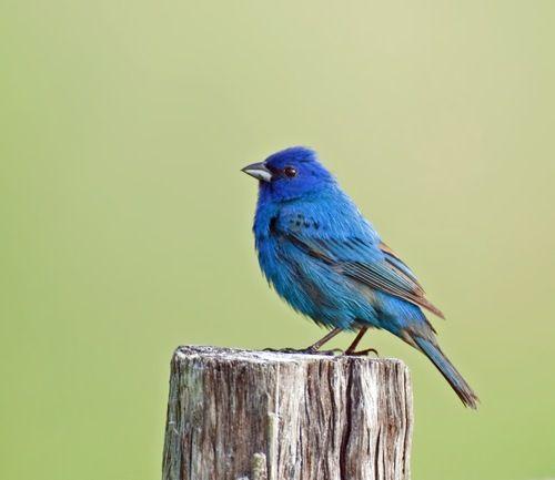 Original animal and birds sounds