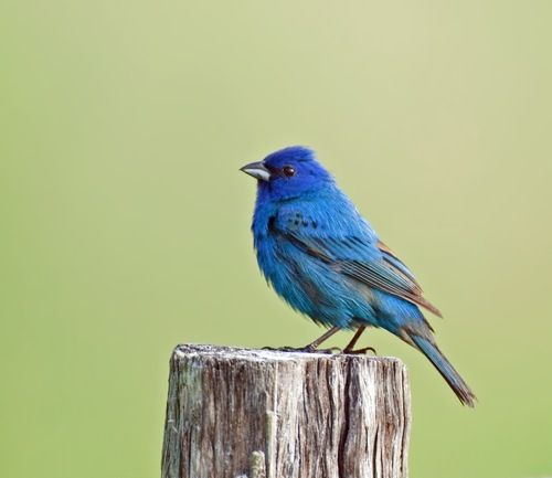 Cornell Launches Archive of 150,000 Bird Calls and Animal Sounds, with Recordings Going Back to 1929