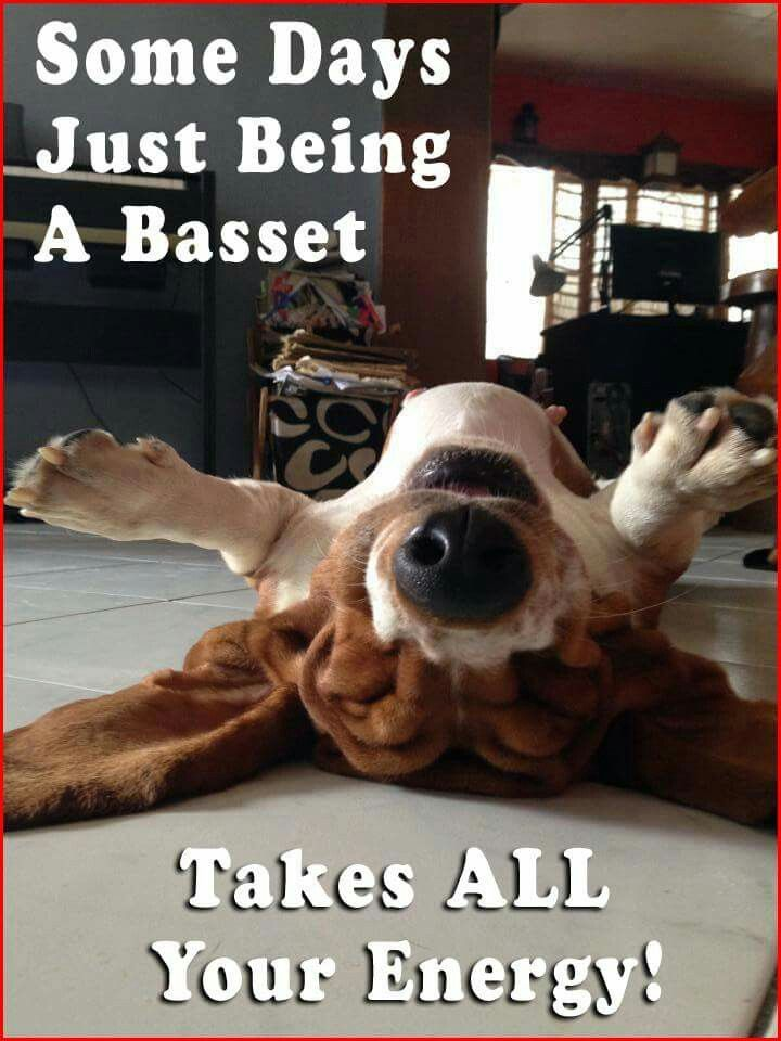 All four of our bassets would have agreed with this.  Ya gotta love a dog that knows how to de-stress!