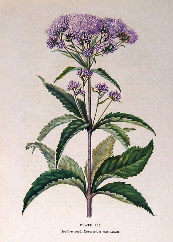 floral prints | Botanical Flower Prints