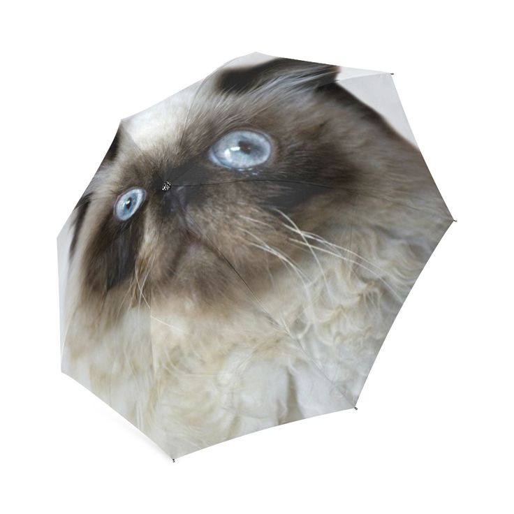 Funny Cat Foldable Umbrella. FREE Shipping.  #erikakaisersot #artsadd #umbrellas  #cats