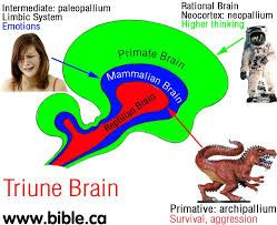 Image result for triune brain