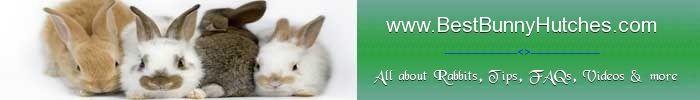 Bunny Hutch: Reliable info on bunny hutch