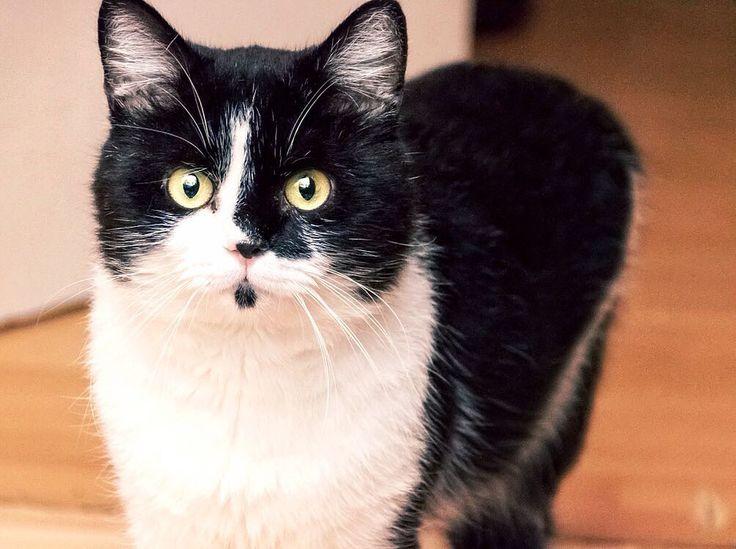 Dexter   #cat #cats #diinadaring #dexter #instastuff #daringphotography #catstagram #kitty #kittens #animal #animals #petstagram #petsagram #photooftheday #catsofinstagram #pet #canoneos760d #instagramcats #catoftheday #lovecats #furry #sleeping #lovekittens #adorable #catlover #instacat