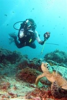 Scuba Diving - Pro Sport Diver. PADI scuba diving courses available, from Open Water Diver to Divemaster. Also speciality courses, including diving with nitrox (Enriched Air Diver). We arrange dive trips to Umkomaas, Sodwana, Mozambique and international sites.