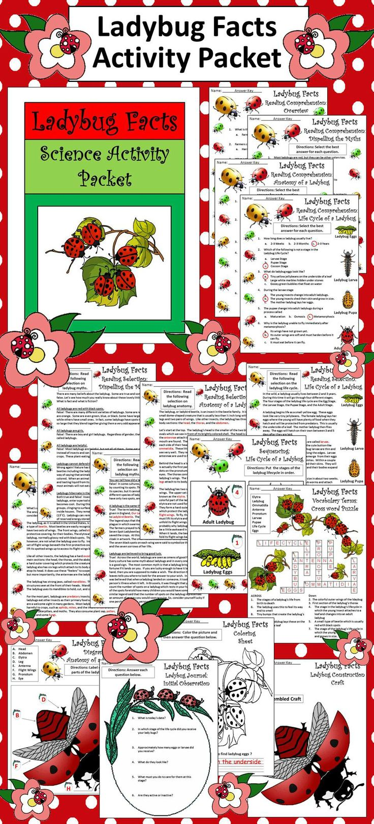 Ladybug Facts Activity Packet: This colorful activity packet explores one of the most beloved insects on Earth, the Ladybug or Ladybird Beetle.