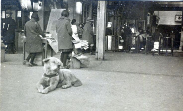 A rare, 80-year-old photo has been found of loyal little Hachiko, an Akita dog famous for its unshakable loyalty to his master, that shows it lying on its stomach in front of Tokyo's Shibuya Station.