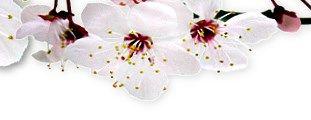 Bachblüten Test - Fragebogen zum kostenlosen Download