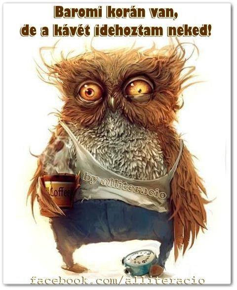 jó reggelt, kávé, vicces, bagoly