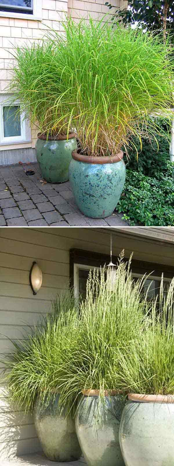 Growing tall and thick grass in big pots is a good idea to create a moveable privacy screen