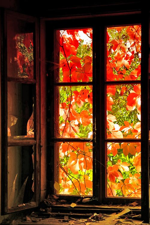 lovely autumn window.  This is the real thing; but, I wonder if real leaves could be decoupaged onto an old window and create a translucent look? Hmmm