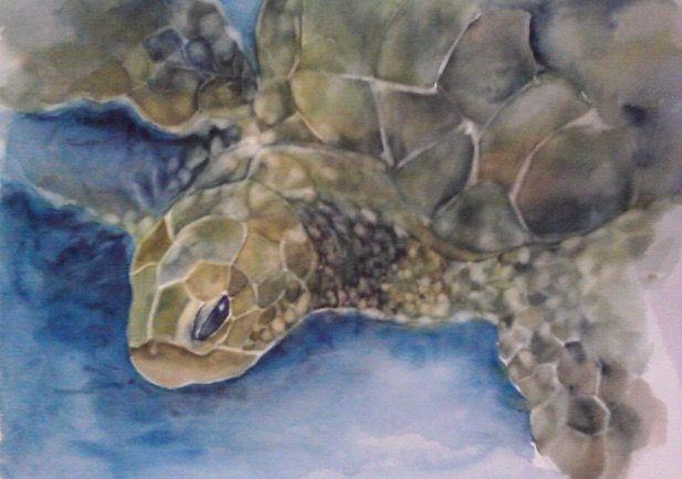 Honu - watercolor