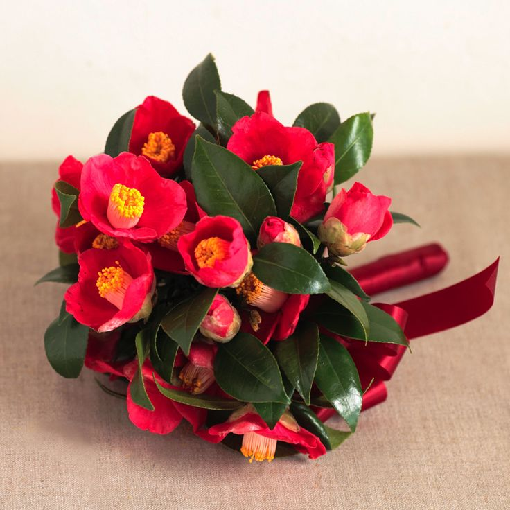 Camellia japonica wedding bouquet flowers, i've haven't seen any like this before, the colours would look lovely against white or ivory, very dramatic