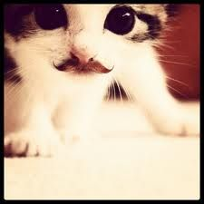 Cat with moustache - Google Search