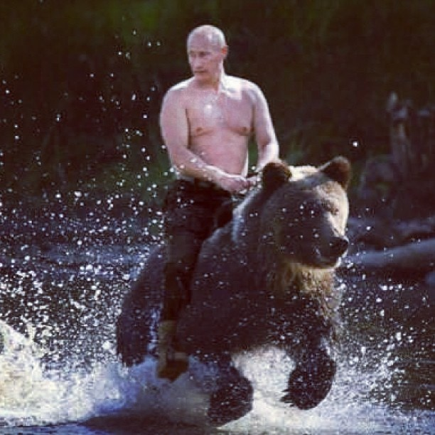 Vladimir Putin's personal bear. What? I don't even know how to process this.