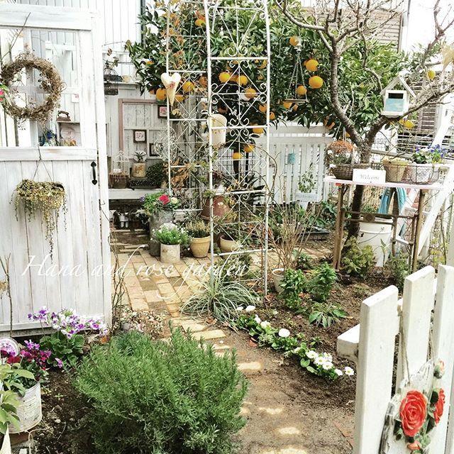 2016.2.1月曜日 * 今朝の小庭…私はこのアングルが1番好きです♡が問題点が一つありまして、どうにもならず日々対策を考えています( ̄_ ̄ )。o0○(どうすっかなぁ) * 今日のブログはそんな事を書いております。良かったら覗いてくださいネ||-*) * #ガーデン#ガーデニング#garden#gardening#花#庭#小庭#フェイクドア#ブラックベリー