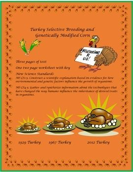 Three pages of text on turkey selective breeding. A two page worksheet with an answer key is included. The texts compares turkey selective breeding and genetically modified corn. Great lesson for the Thanksgiving holiday. Can be a homework or class assignment.