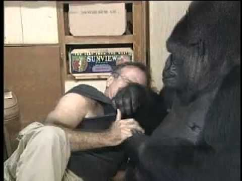 This film of Robin Williams meeting and playing with Koko, the sign-language gorilla, has made me a fan.