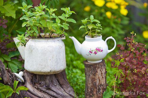 Дача, растения в чайнике