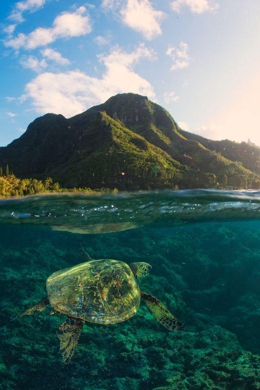 Kauai, Hawaii...                                                                                                                                                                                 More