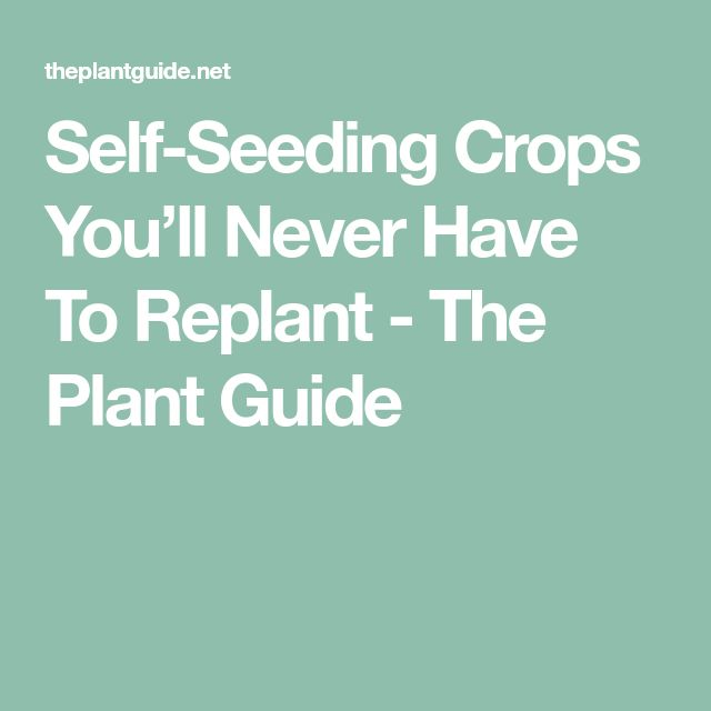 Self-Seeding Crops You'll Never Have To Replant - The Plant Guide