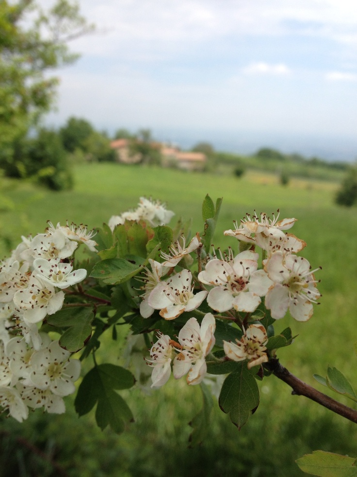 Fiori in Val Luretta.