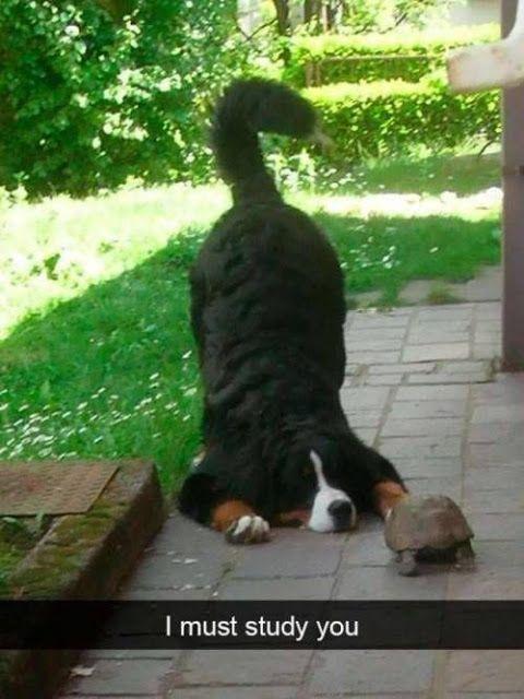 Lustigste Tierbilder des Tages: Lustige Katzen, Hunde, Haustiere, Tiere