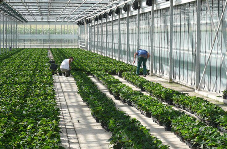 Meccanismi preventivi, certificazione di tutte le piante importate da Paesi terzi, possibilità per le autorità nazionali di eradicare anche nelle proprietà private e nuove regole...