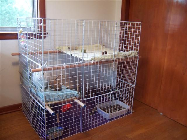 Easy, inexpensive and really big indoor rabbit hutch! Way better than those tiny cages PetsMart sells.