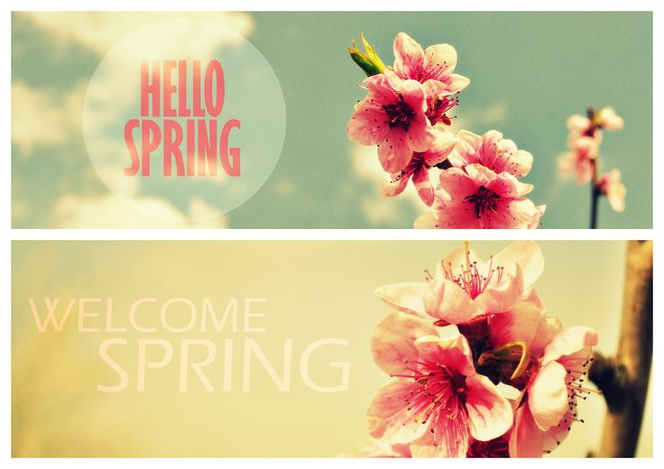 Hello Spring | Welcome Spring | by Nykolett | #photography #spring
