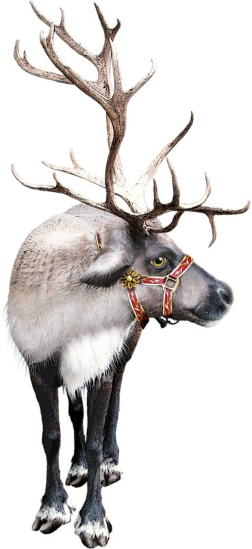 tubes christmas / reindeer sleigh