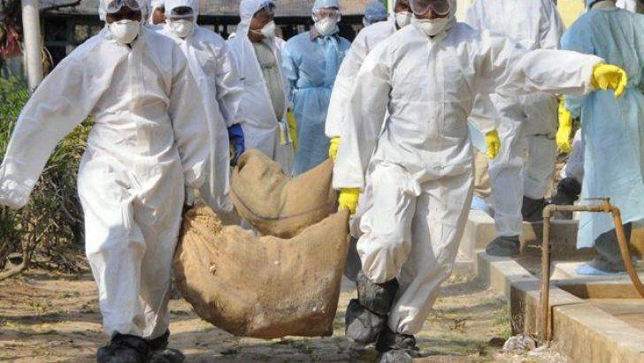 Autoritățile constănțene, în alertă: Alte păsări moarte descoperite după lebăda cu gripă aviară