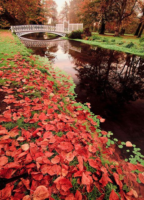 Flaming red leaves indicate the season on a misty morning at Morden Hall Park in London | Flickr - Photo Sharing!