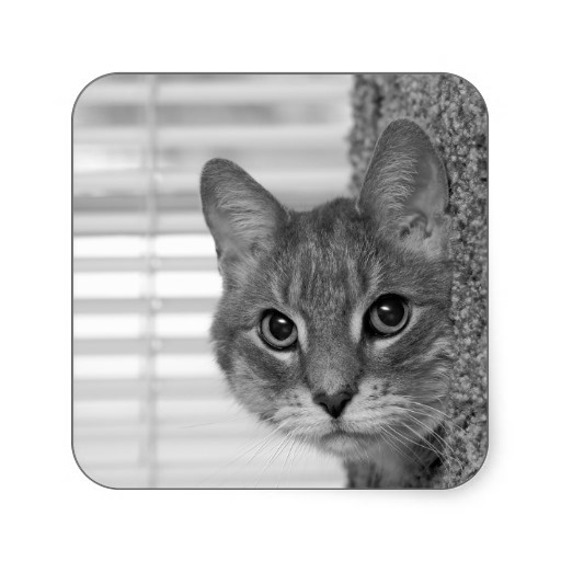 Cat photo stickers on Zazzle