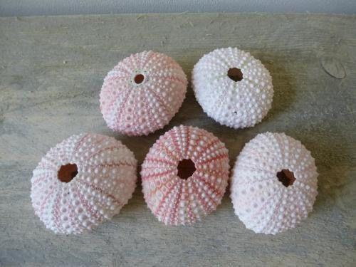 Roze zeeegels,super om mee te decoreren.