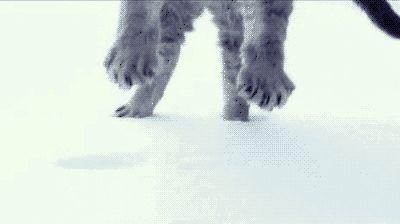 Katzen-GIFs vom Katzenhasser - Heute: Pummelchen im Schnee | Das Filter