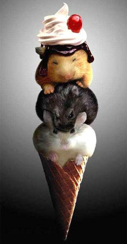 """Ice Cream! Get your Ice Cream! Our special flavor is hamster today!"" - IceCream Man."
