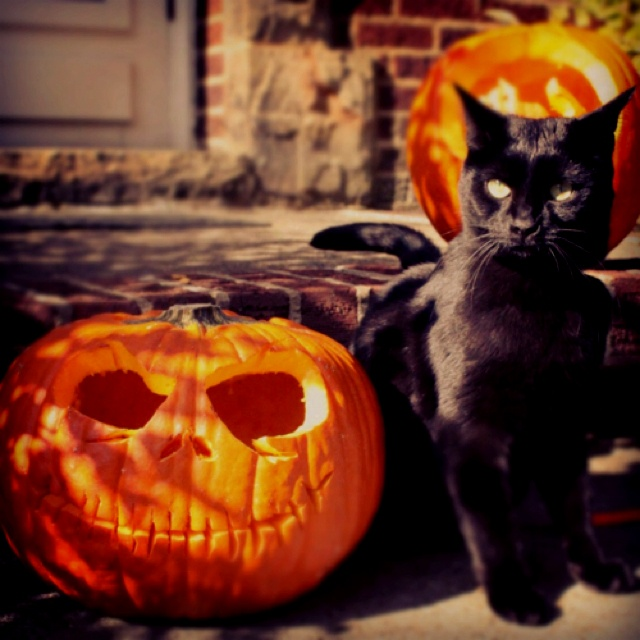картинки хэллоуина с кошками зависимости