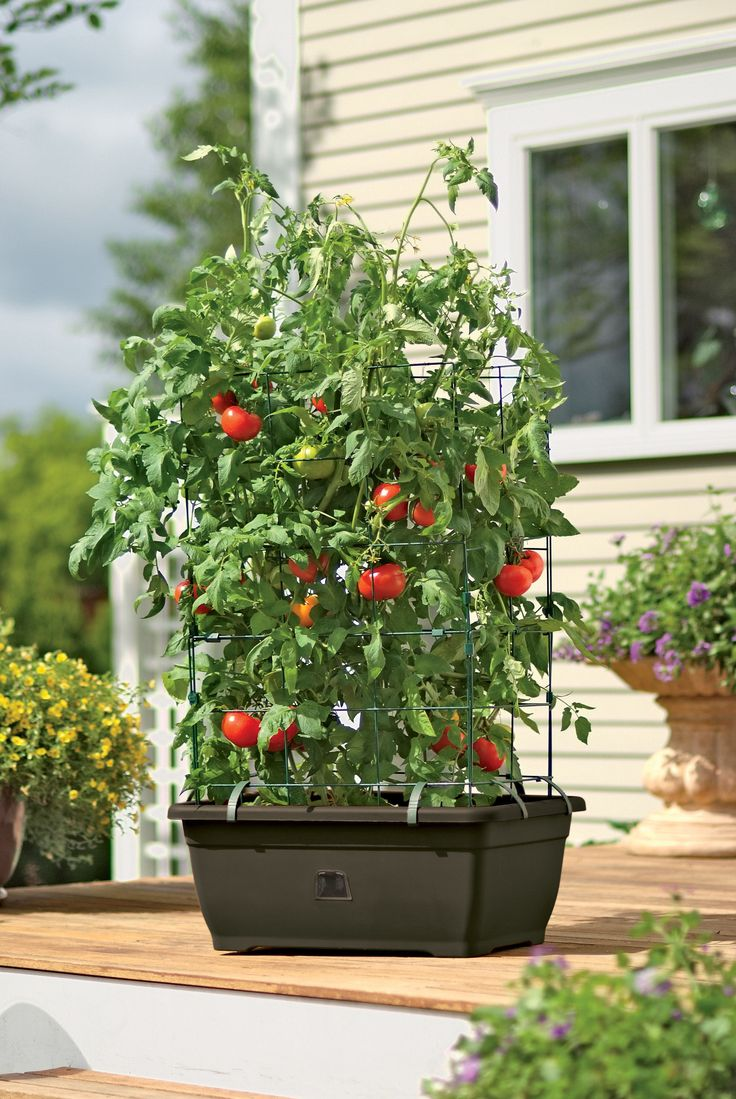 All In One Tomato Success Kit Buy From Gardener S Supply 400 x 300