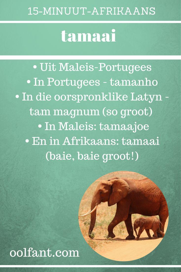 Leer Afrikaans, 15-Minuut-Afrikaans, tuisskool, tuisskool in Afrikaans, tamaai, Maleis-Portugees, Latyn