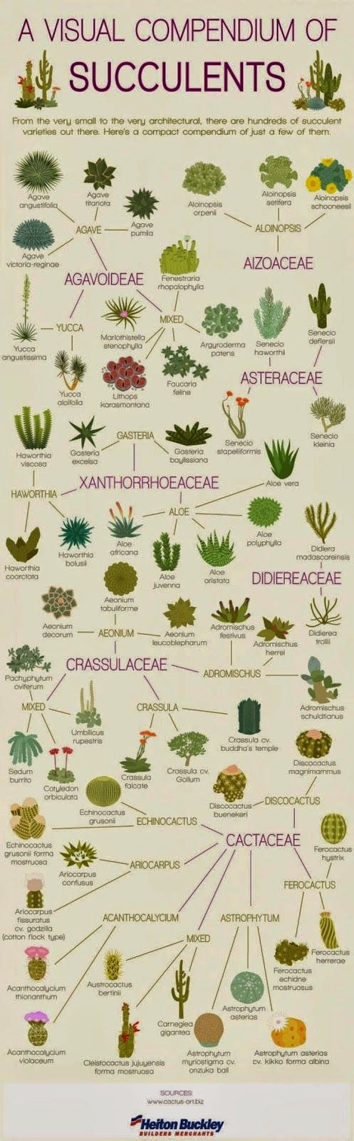 A Visual Compendium of Succulents...