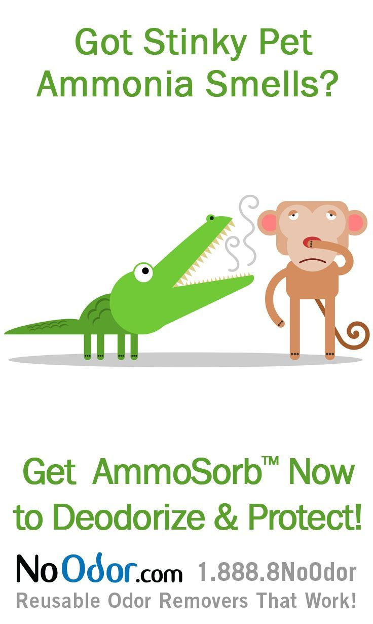 1000 images about ammonia smell solutions on pinterest for Fish tank odor eliminator