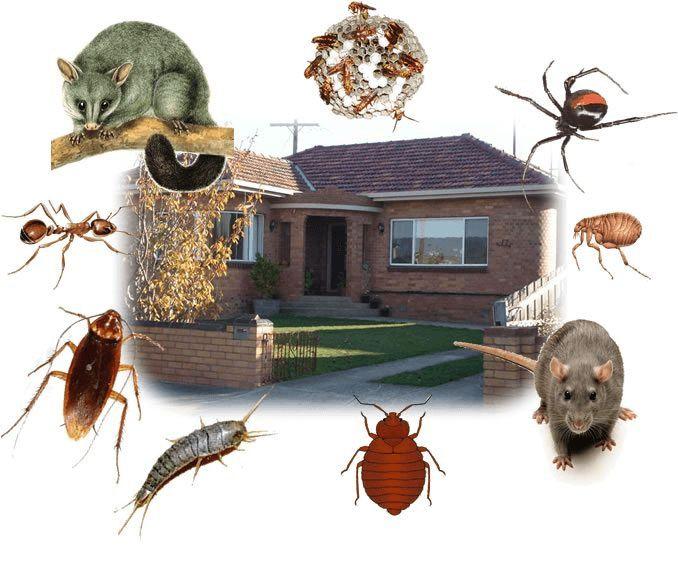 DIY Home Pest Control