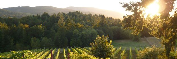 Blue Grouse Estate Winery is one of the original estate wineries in the Cowichan Valley.